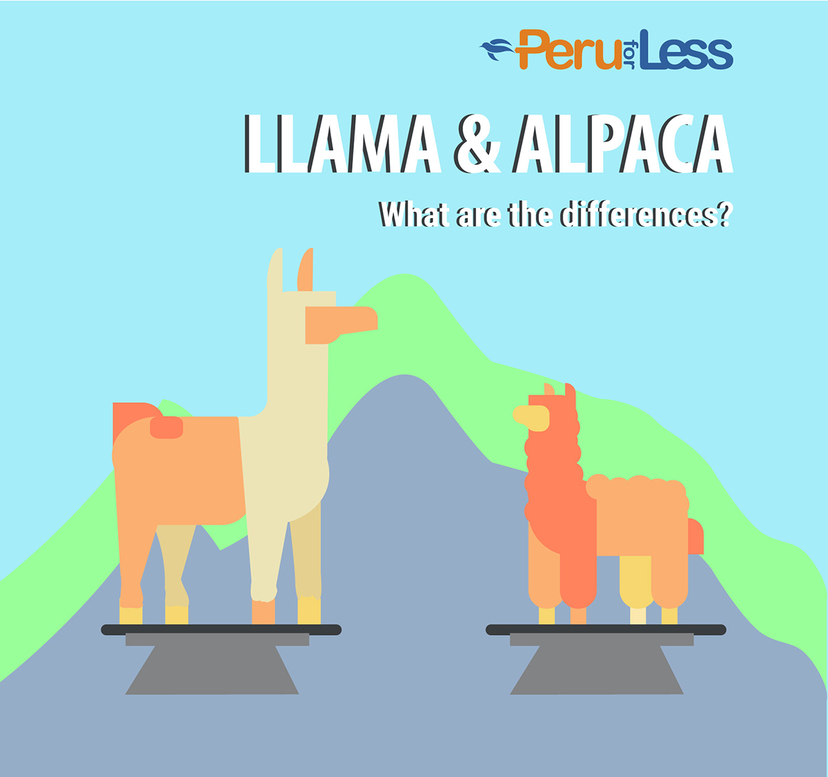 A graphic with a llama and alpaca showing the difference in size, face shape, and ear shape.