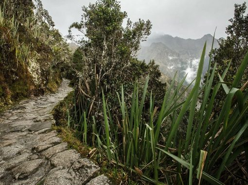 Inca Trail, Andes