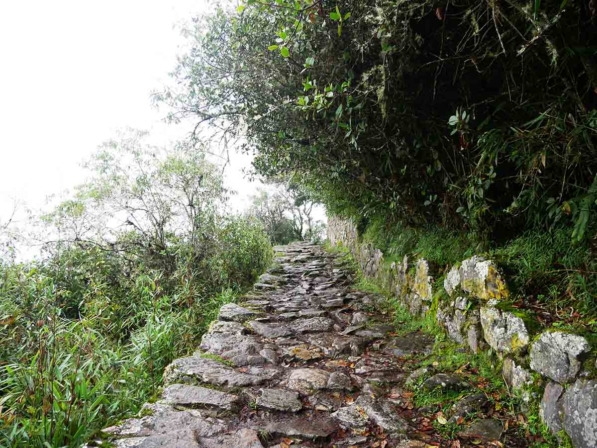 A stone path with overgrown trees above leading to the Sun Gate at Machu Picchu.