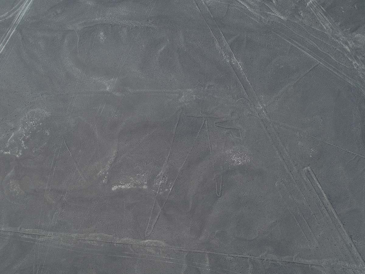 A bird shape along with several lines etched into the Nazca Desert.