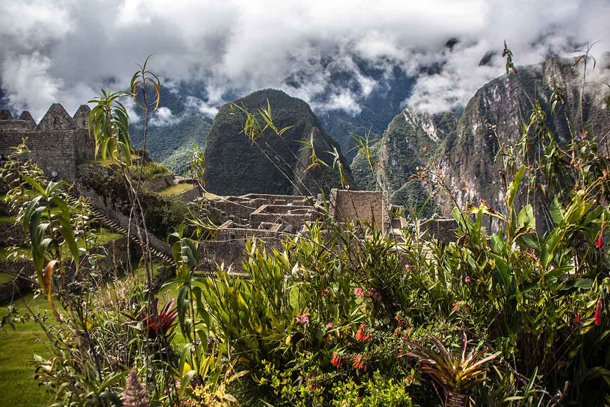 Green vegetation and red flowers typical of a cloud forest climate with the Machu Picchu ruins in the background.