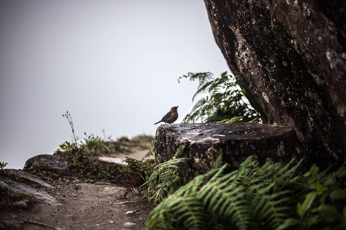 A bird sits on a rock beside a hiking trail covered in fog.