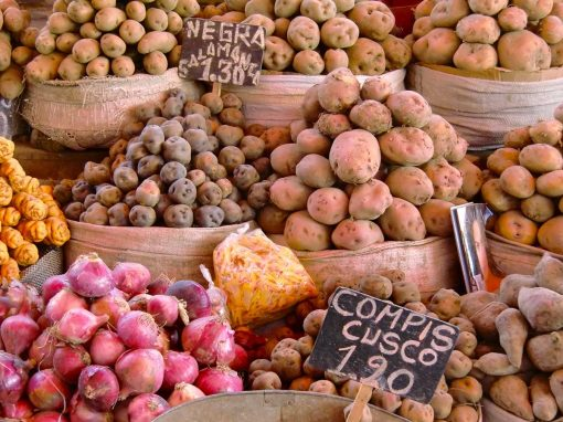 A large variety of Peruvian potatoes in a local market.