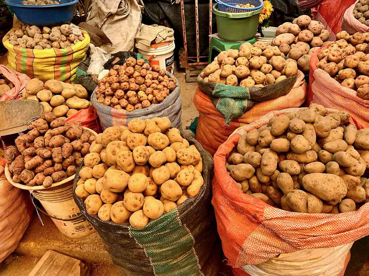 A large variety of Peruvian potatoes in sacks at a local market.