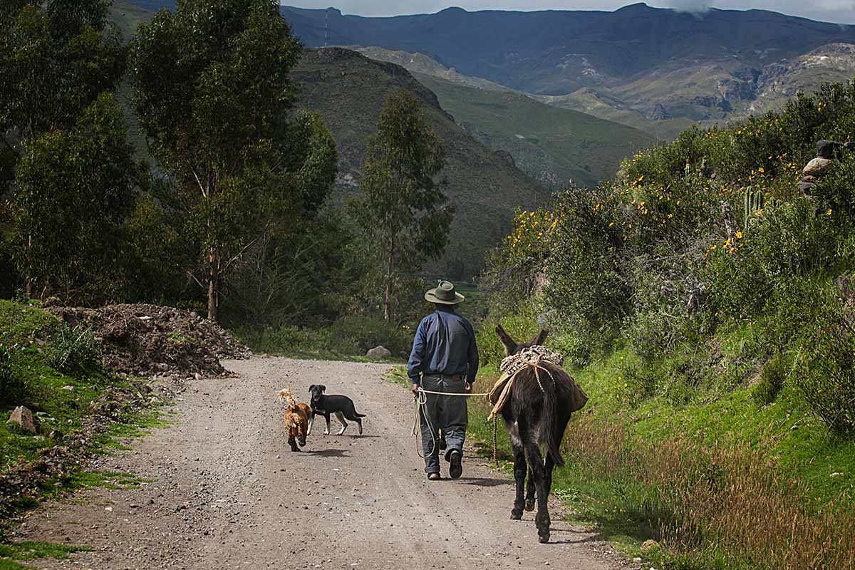 Farmer walking on a dirt road leading a mule and two dogs in the Colca Valley.