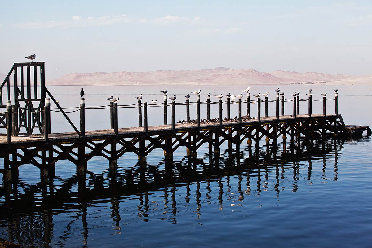 Birds perched on the El Chaco pier on the calm waters of the Paracas Bay.