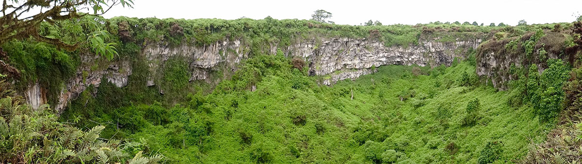 Los Gemelos in the Galapagos are giant sinkholes overgrown by trees. Rough lava walls can be seen at the edge of the crater.