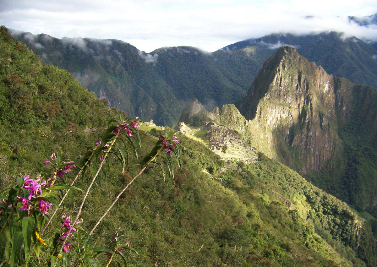 Wild orchids can be spotted in the green mountains surrounding Machu Picchu.