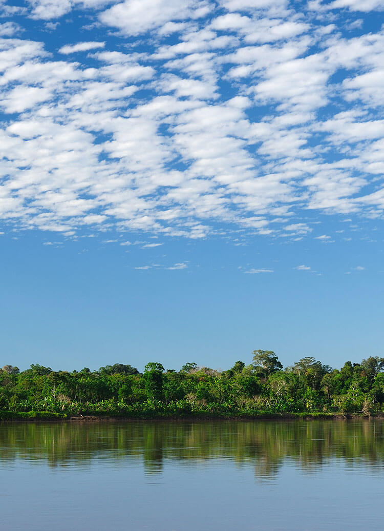 view from a river in the Amazon Rainforest