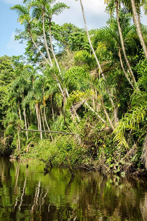 A river and trees in the Peruvian Amazon