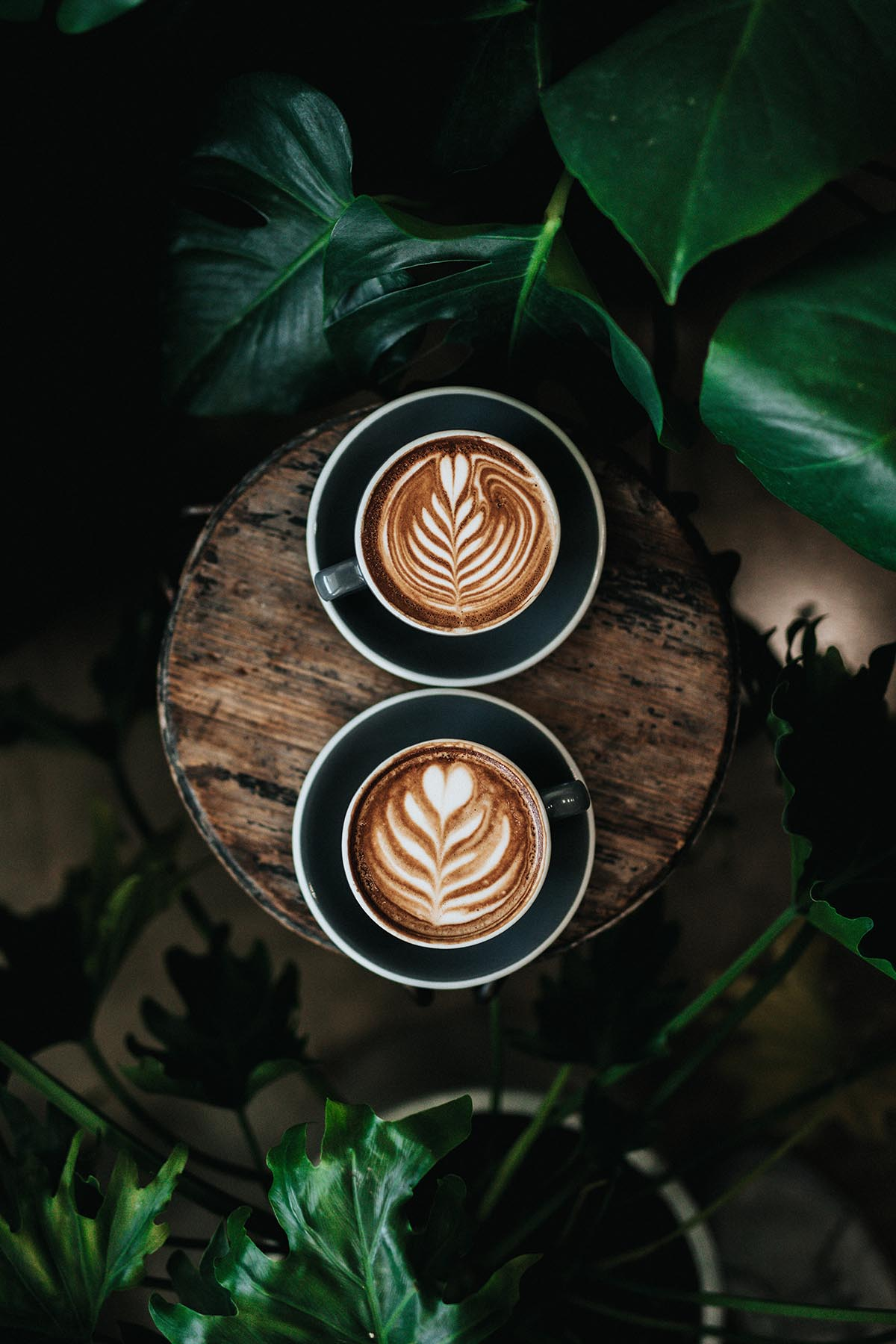 An overhead shot of two cappuccinos with flower designs in the foam against a dark wooden background.