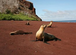 Galapagos seals at the beach