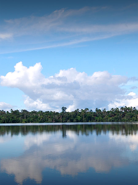A cloud reflected in the water of a river surrounded by trees in the Amazon Rainforest.