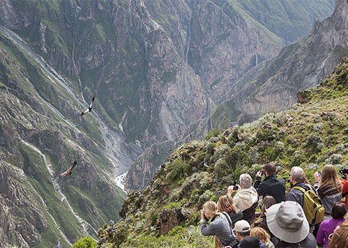 Tourists taking photos of Andean Condors in Colca Canyon at the Mirador Cruz del Condor, a popular Arequipa destination
