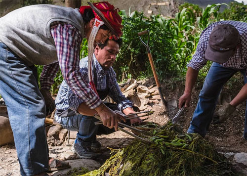 Three Peruvian men building Pachmanca, or earth oven to make a traditional Andean meal of meats, potatoes, habas and more