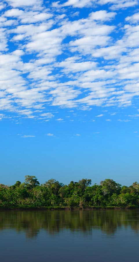 A river surrounded by dense forest underneath a big blue sky in the Peruvian Amazon.