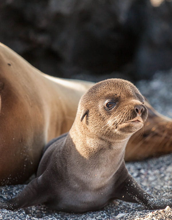 Picture of a seal in the Galapagos Island