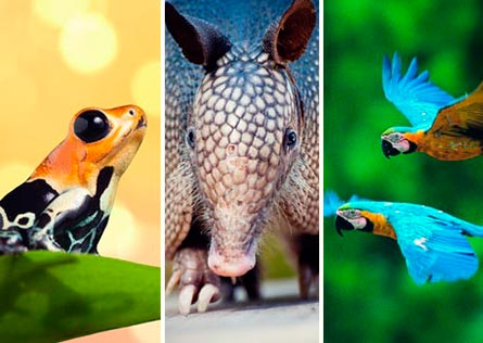 Close-up of a frog, an armadillo and flying macaws