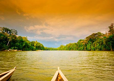 River boat going down river surrounded by trees in Amazon https://www.peruforless.com/admin/admin/tabHome/edit/8 Manu