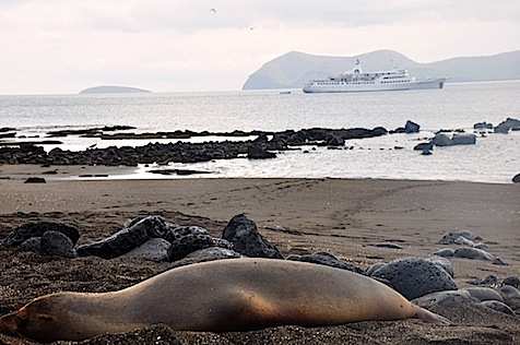 Galapagos cruise ship and sea lion on beach.