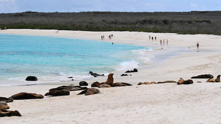 White sand beach in the Galapagos