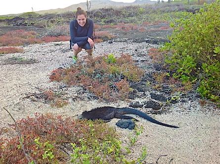 Galapagos traveler wtih marine iguana