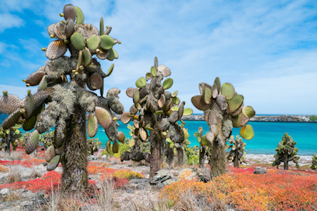 Galapagos cactus landscape and blooming flowers