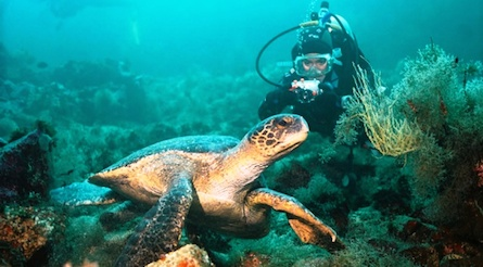 Galapagos scuba diver taking a photo of a sea turtle.