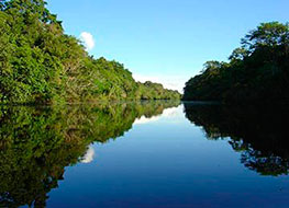 View of the wide Amazon River surrounded by dense green jungle vegetation.