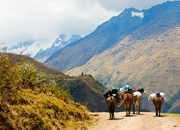 Pack horses on the trail to Salkantay glacier