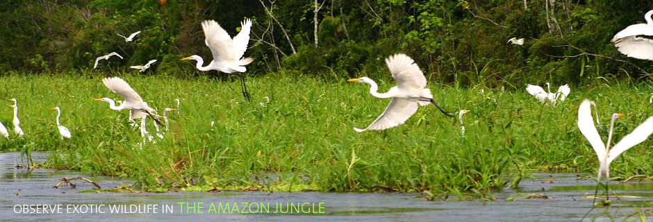 Observe Exotic Wildlife in the Amazon Jungle