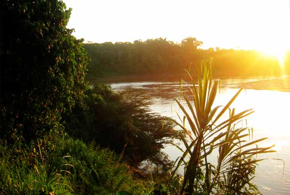 Banks of the Amazon River